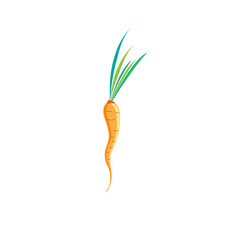 Sign of bright carrots vector