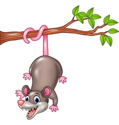 Cartoon funny opossum on a tree branch vector