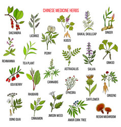 Chinese medicinal herbs vector