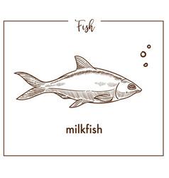 milkfish sketch fish icon of chanos vector image vector image