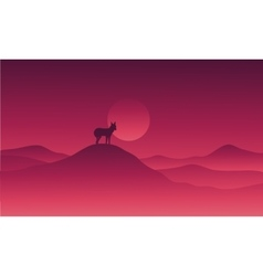 Wolf in hills alone vector image