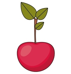 Cherry fruit food design vector