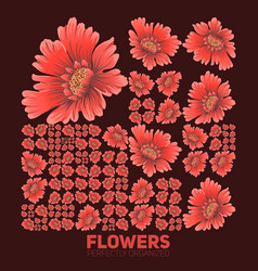 Flowers organized perfectly flowers vector