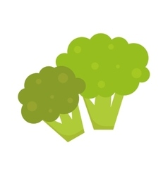 Fresh green broccoli isolated on white background vector