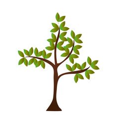 tree plant nature icon vector image