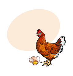 Hen chicken and eggs - whole and broken in half vector