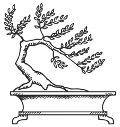 bonsai sketch vector image