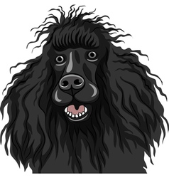 Black dog poodle breed smiles vector