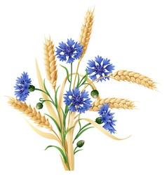 cornflower ears big vector image