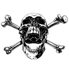 Graphic realistic human skull with crossed bones vector
