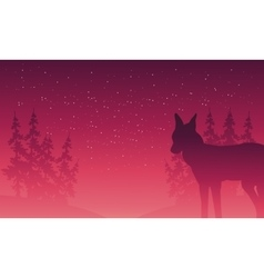 Silhouette of wolf and spruce vector