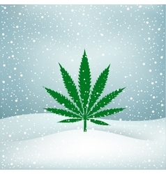 Hemp grows snow vector