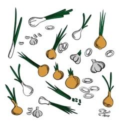 Fresh onion leek and garlic vegetables vector image