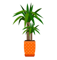 Yucca houseplant in flower pot vector