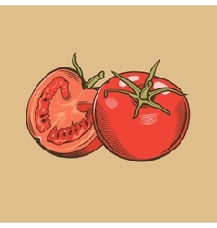 Tomatoes in vintage style Colored vector image