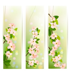 Three nature banners with blossoming tree brunch vector image vector image