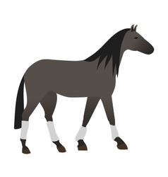 Horse isolated animal vector
