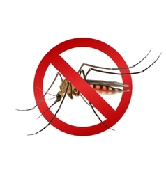 Mosquito stop sign vector image
