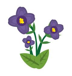 african violet flower image vector image
