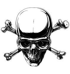 graphic horror human skull with crossed bones vector image