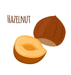 Hazelnut in flat cartoon style forest natural nut vector