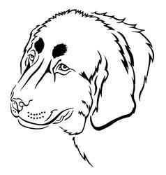 Tibetan mastiff vector