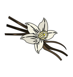 vanilla flower and pods icon image vector image