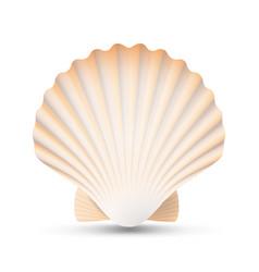 scallop seashell beauty exotic souvenir vector image