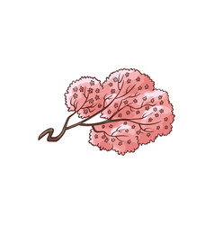 blooming sakura branch flat vector image