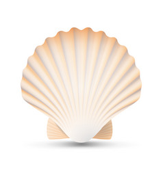 Scallop seashell beauty exotic souvenir vector