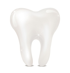 Tooth on a white background isolated vector image vector image