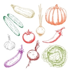 Autumnal ripe vegetables colorful sketch icons vector