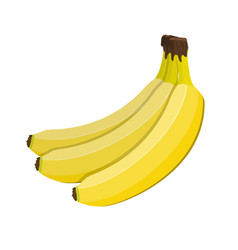 bunch of bananas isolated on white vector image