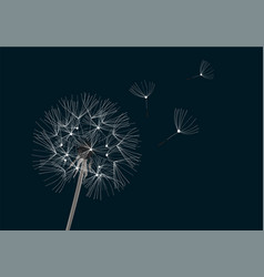 flower dandelion vector image