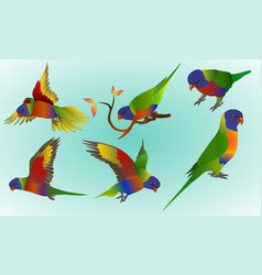 Rainbow lorikeet vector