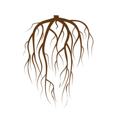 Tree underground roots brown tree root on vector