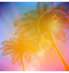 Palm trees with beautiful sunset vector