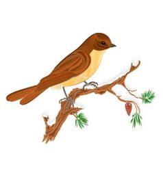 Bird on a branch of pine christmas motive vector