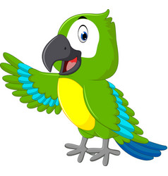 cute macaw cartoon vector image