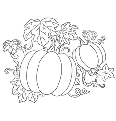 Pumpkins vegetables vector image