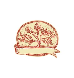 Olive tree ribbon oval etching vector