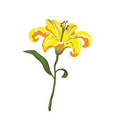 realistic vivid yellow lily on white vector image