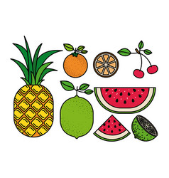 Colorful silhouette with set of tropical fruits vector