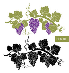 The grapes are symbols template isolated vector