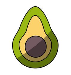 Delicious and fresh avocado vector