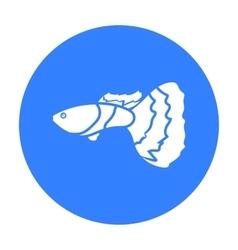 Guppy fish icon black singe aquarium fish icon vector