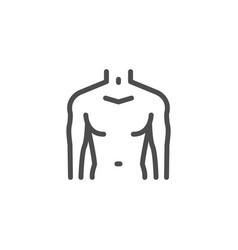 male torso line icon vector image vector image