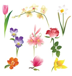 9 realistic flowers icons vector image
