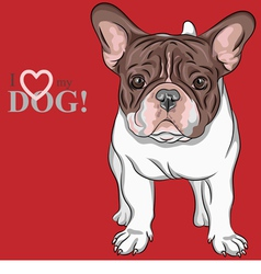 Dog french bulldog breed vector