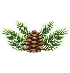 Pinecone with pine leaves on white background vector
